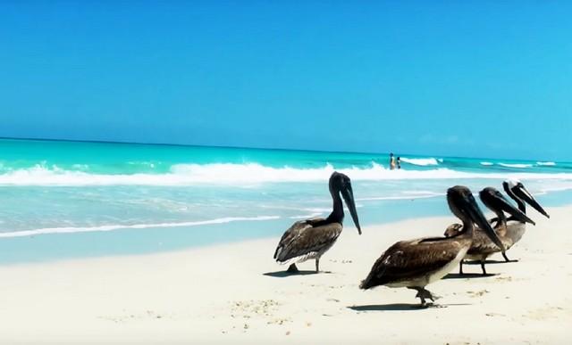 пляжи с белым песком.Куба