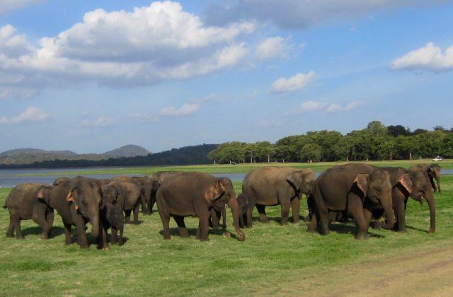 купить горящий тур в Шри-Ланку